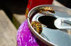 Hoe zorg jij er voor dat je zonder overlast van muggen, wespen of vliegen op je terras kunt zitten?