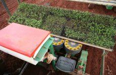 Hoe kunnen we Stevia op een duurzame manier in Nederland kweken?