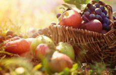 Wat is jullie toekomstverwachting ten aanzien van de trend plantaardig produceren?